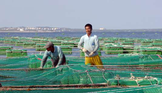 Mainland Chinese fishermen work at a cobia fish farm off the coast of Penghu County, 26 July 2007. Frozen cobia, with a wholesale price tag of 12 USD per kilogram (2.23 pound), is exported to the European Union countries, Canada, Japan, and South Korea for sashimi and fillet.    AFP PHOTO/Sam YEH (Photo by SAM YEH / AFP)
